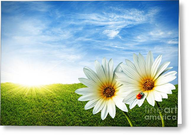 Sunnies Greeting Cards - Spring Greeting Card by Carlos Caetano