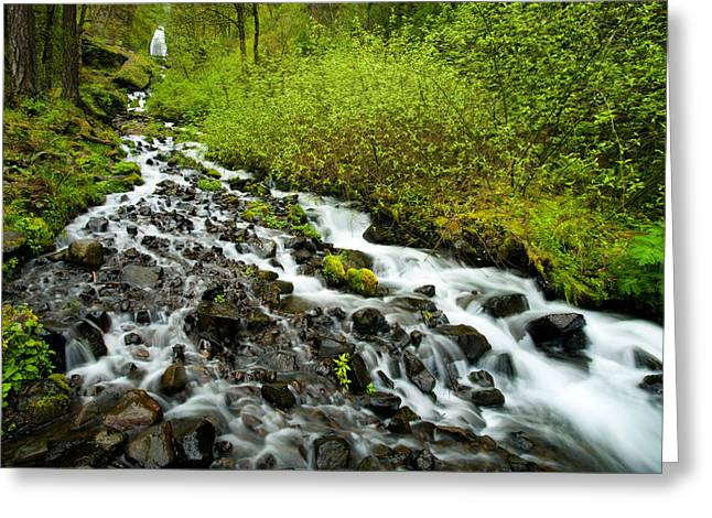 Cascade Greeting Cards - Spring Cascades Greeting Card by Mike  Dawson