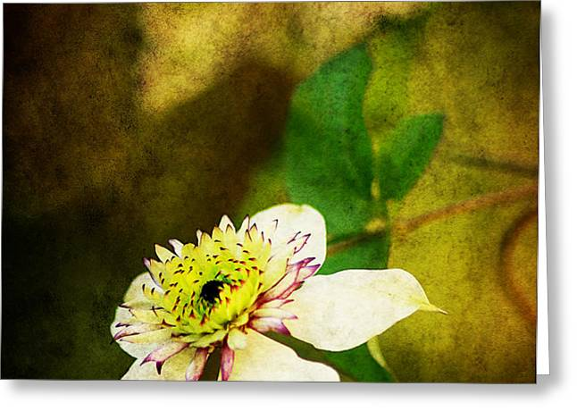 Spring Charm Greeting Card by Darren Fisher
