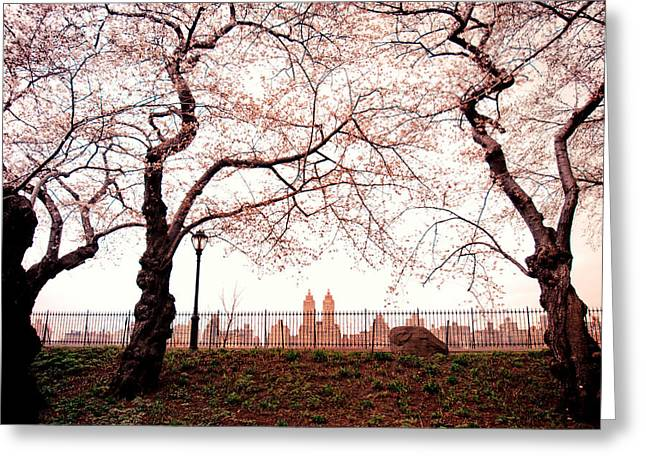 Spring Cherry Blossoms - Central Park Reservoir Greeting Card by Vivienne Gucwa