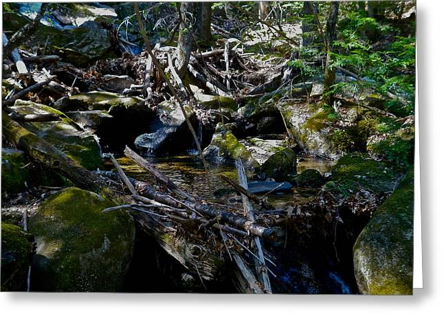 Dappled Light Greeting Cards - Spring Cleaning 6 Greeting Card by George Ramos