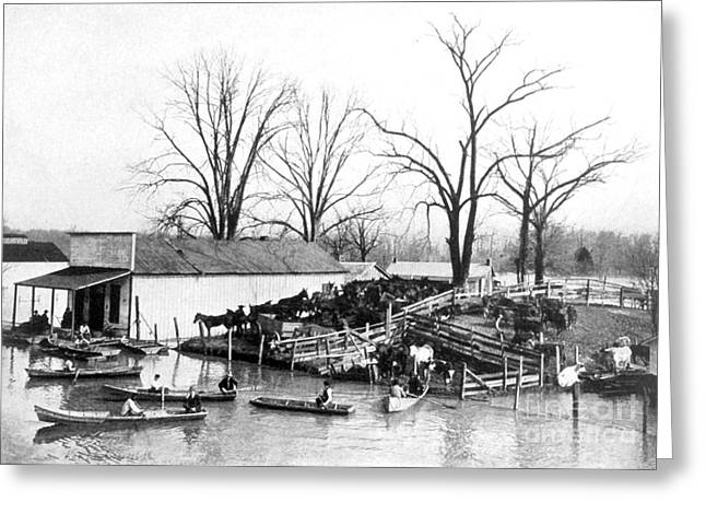Flooding Greeting Cards - Spring Flood, 1903 Greeting Card by Science Source