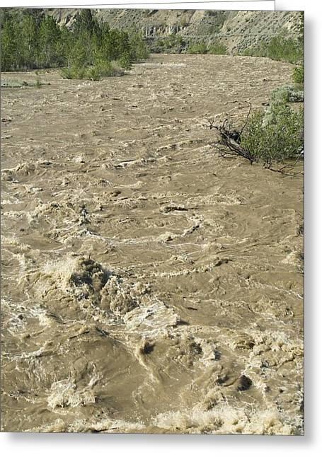 Flooding Greeting Cards - Spring Flood, Nicola River, Canada Greeting Card by Kaj R. Svensson