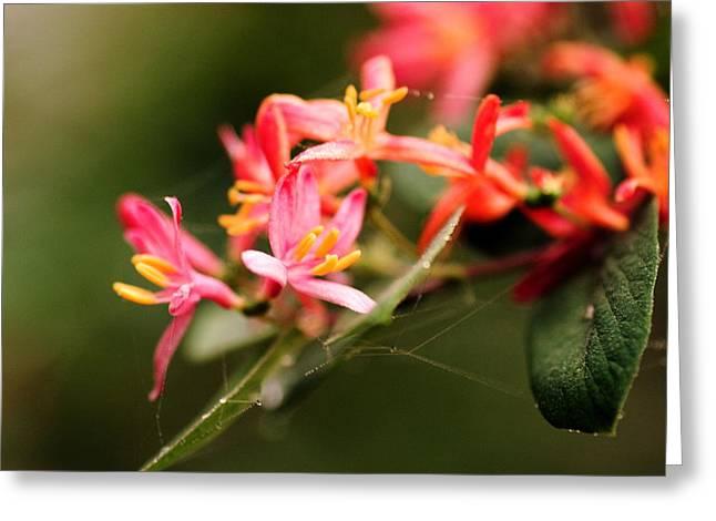 Hurdles Greeting Cards - Spring Flower Greeting Card by Amanda Kiplinger