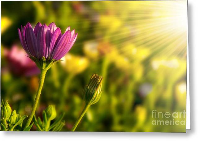 Germinate Greeting Cards - Spring Flower Greeting Card by Carlos Caetano