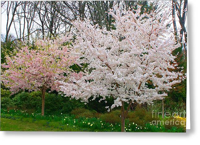 Fantasy Tree Mixed Media Greeting Cards - Spring Flowering Trees Greeting Card by Anahi DeCanio