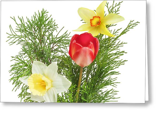 Flower Express Greeting Cards - Spring flowers - a tulip and narcissuses with juniper branches Greeting Card by Aleksandr Volkov