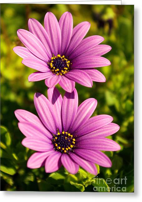 Germinate Greeting Cards - Spring Flowers Greeting Card by Carlos Caetano