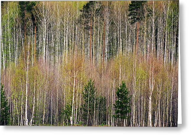 Spring Forest Lace Greeting Card by Vladimir Kholostykh