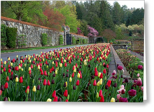 Spring Bulbs Digital Art Greeting Cards - Spring Garden View III Greeting Card by Suzanne Gaff
