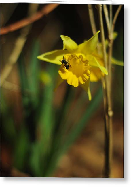 Lent Greeting Cards - Spring Greeting Greeting Card by Rebecca Sherman