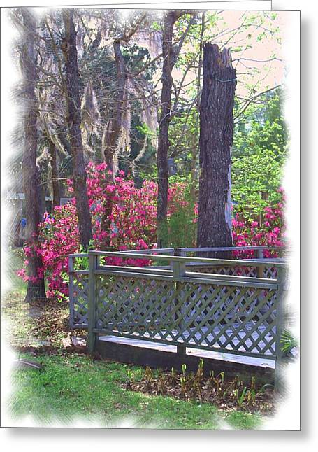 Pasco County Greeting Cards - Spring has Sprung Greeting Card by Judy Hall-Folde