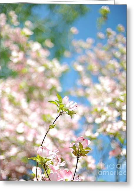 Pink Blossoms Greeting Cards - Spring Greeting Card by HD Connelly