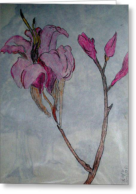 Spring Bulbs Drawings Greeting Cards - Spring in Pink Greeting Card by De Beall