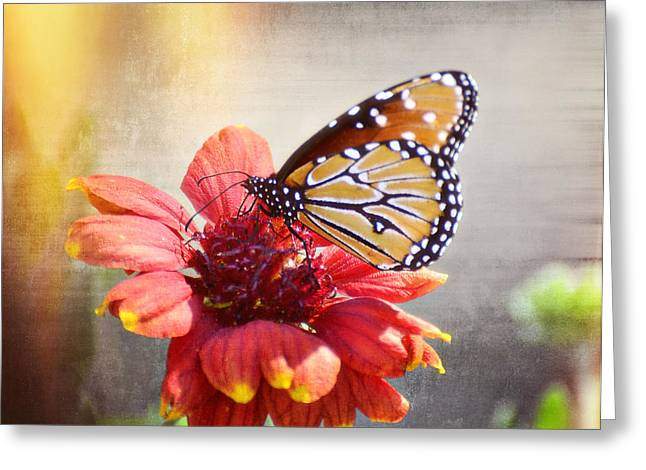 Queen Butterfly Greeting Cards - Spring is in the Air  Greeting Card by Saija  Lehtonen