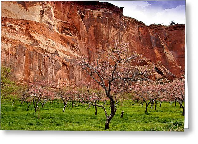 Wild Orchards Greeting Cards - Spring in Utah Greeting Card by Jean Noren