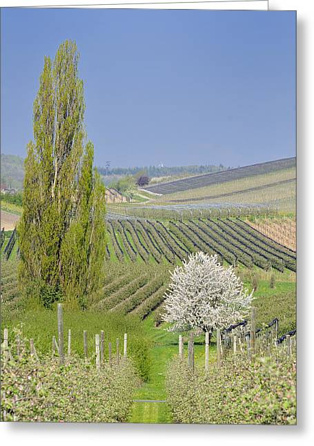 Cultivation Greeting Cards - Spring landscape Greeting Card by Matthias Hauser