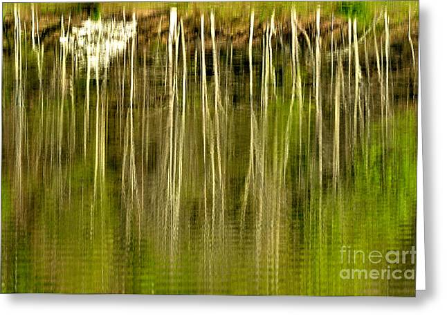 Spring Morning Reflections Greeting Card by Thomas R Fletcher
