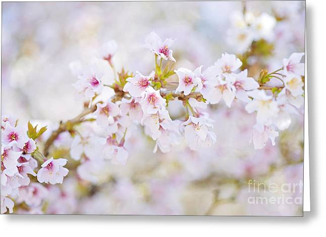 Close Focus Floral Greeting Cards - Spring Pastels Greeting Card by Jacky Parker