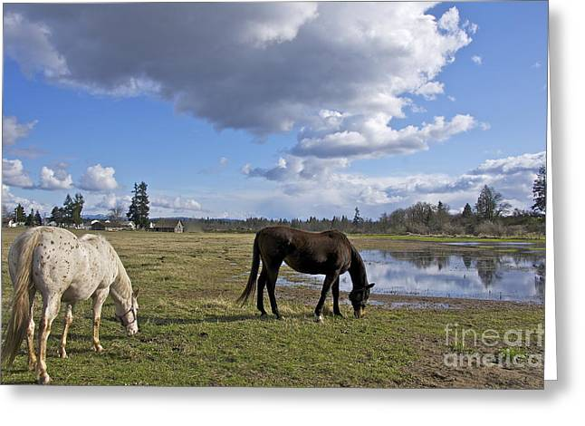 Sean Horse Greeting Cards - Spring Pasture Greeting Card by Sean Griffin
