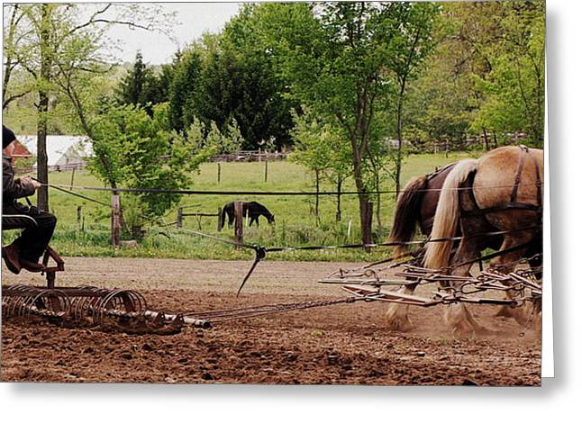 Amish Greeting Cards - Spring Planting Greeting Card by Linda Mishler