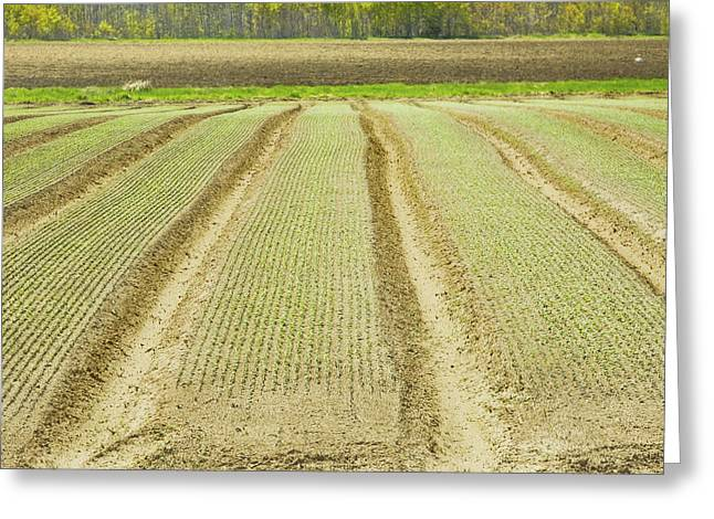 Sowing Greeting Cards - Spring Plowed Farm Field Ready For Planting In Maine Greeting Card by Keith Webber Jr
