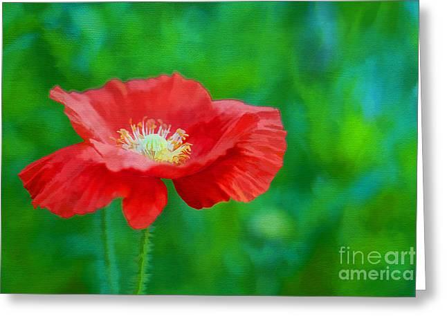 Spring Poppy Greeting Card by Darren Fisher