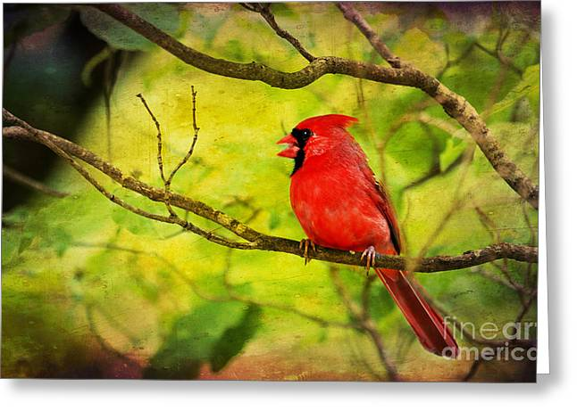 Cardinals. Wildlife. Nature. Photography Greeting Cards - Spring Red Bird Greeting Card by Darren Fisher