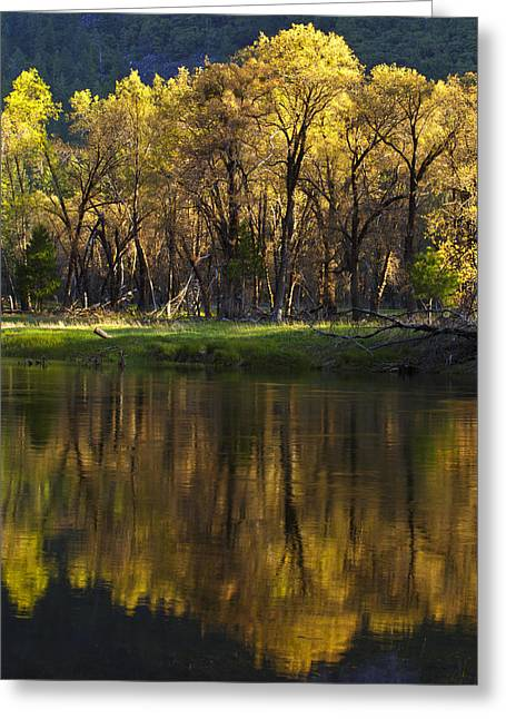 Tree Reflections Greeting Cards - Spring Reflections Greeting Card by Rick Berk