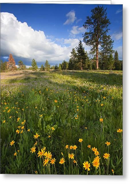 Prairies Greeting Cards - Spring Shadows Greeting Card by Mike  Dawson