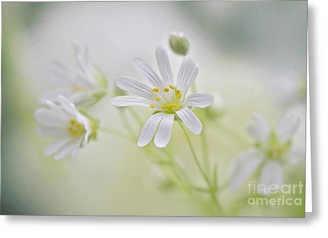 Spring showers Greeting Card by Jacky Parker