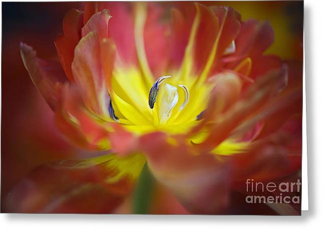 Close Focus Floral Greeting Cards - Spring Splash Greeting Card by Jacky Parker