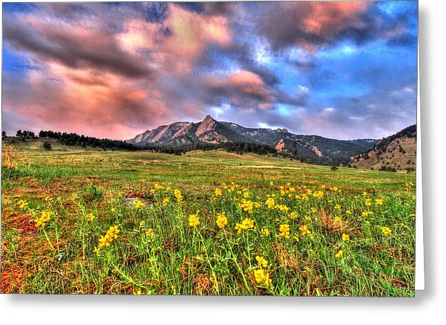 Cu Boulder Greeting Cards - Spring Steps Greeting Card by Scott Mahon
