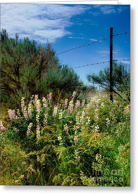 Ranch Photographs Greeting Cards - Spring Time View Greeting Card by Robert Bales