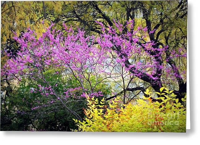 Spring Trees In San Antonio Greeting Card by Carol Groenen