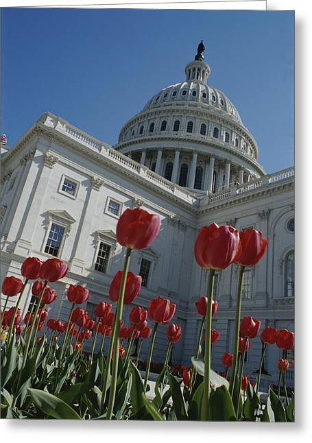 Governmental Greeting Cards - Spring Tulips At The Capitol Greeting Card by Brian Gordon Green