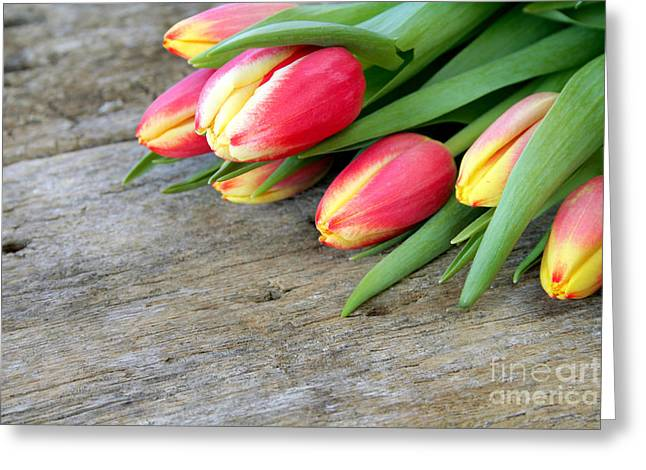 Tulip Bud Greeting Cards - Spring Tulips Greeting Card by Darren Fisher