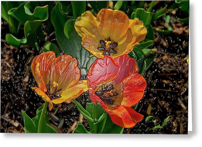 My Ocean Greeting Cards - Spring Tulips Digital Art Greeting Card by Don  Wright