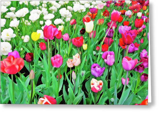 Flora Images Greeting Cards - Spring Tulips Flower Field I Greeting Card by Artecco Fine Art Photography