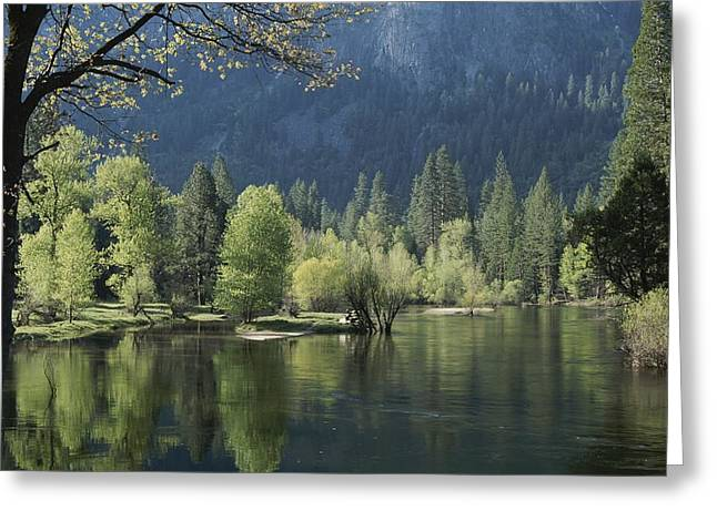 Woodland Scenes Greeting Cards - Spring View Of The Merced River Greeting Card by Marc Moritsch