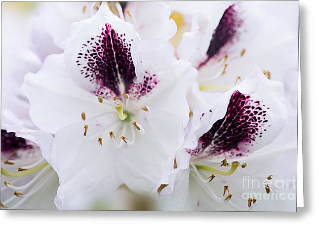 Spring White Greeting Card by Jacky Parker