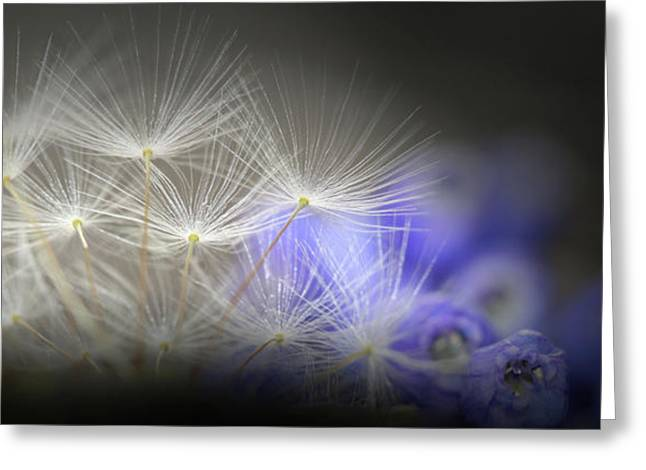 Blue Bonnet Greeting Cards - Spring wishes Greeting Card by Kim Henderson