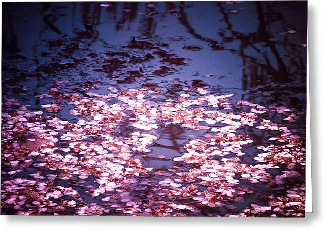 Spring's Embers - Cherry Blossom Petals on the Surface of a Pond Greeting Card by Vivienne Gucwa