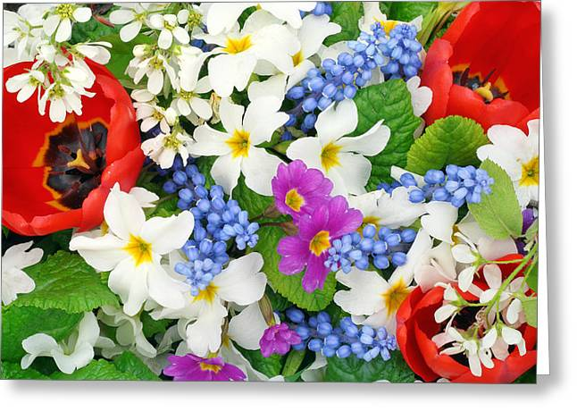 Flower Express Greeting Cards - Springs flowers colors  Greeting Card by Aleksandr Volkov