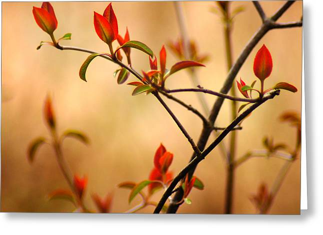 Warm Tones Greeting Cards - Springs Serenade Greeting Card by Bill Pevlor