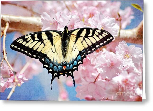 """cheryl Davis"" Greeting Cards - Springtime Butterfly Greeting Card by Cheryl Davis"