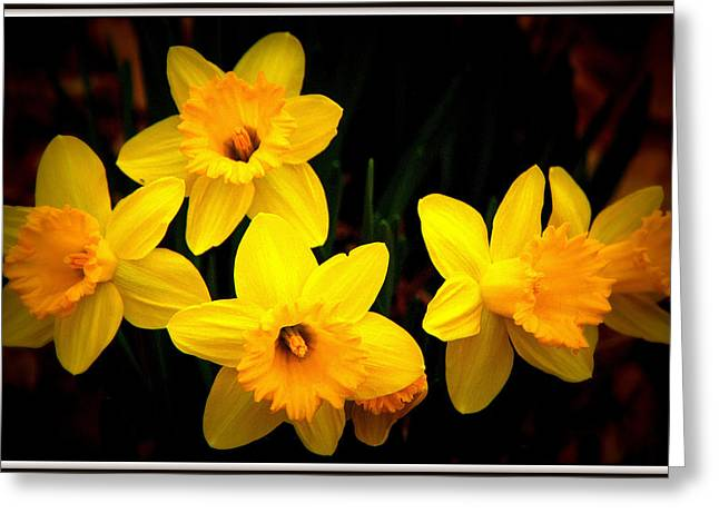 Daffodils Photographs Greeting Cards - Springtime Daffodils Greeting Card by Tam Graff