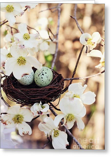 Dotted Shells Greeting Cards - Springtime Eggs and Nest Greeting Card by Stephanie Frey