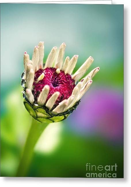 Filigree Greeting Cards - Springtime flower Greeting Card by Viaina