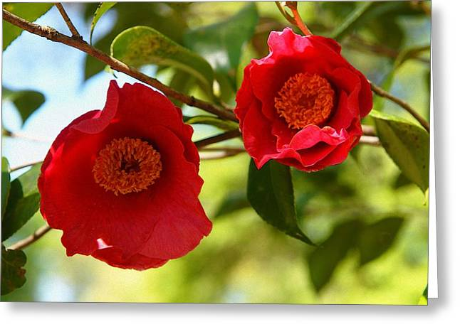 Eye4life Photography Greeting Cards - Springtime Flowers Greeting Card by Alicia Morales